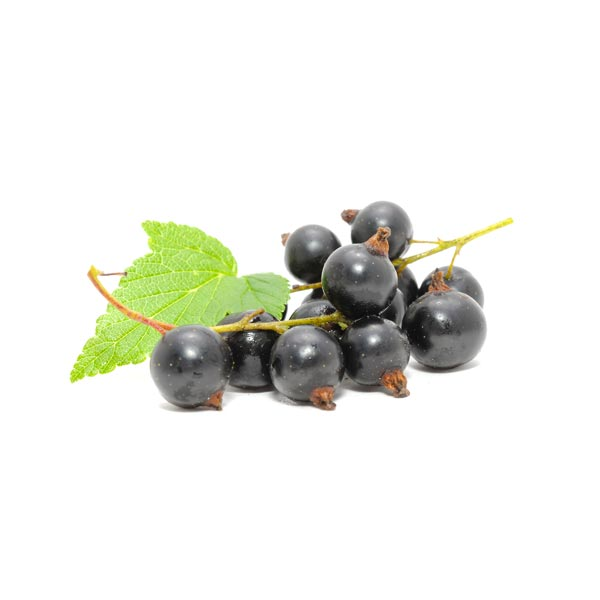 vdfe-product-Black_Currant