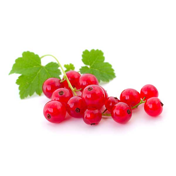 vdfe-products-red-currant